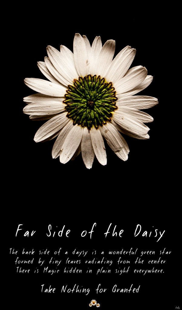 far side of the daisy