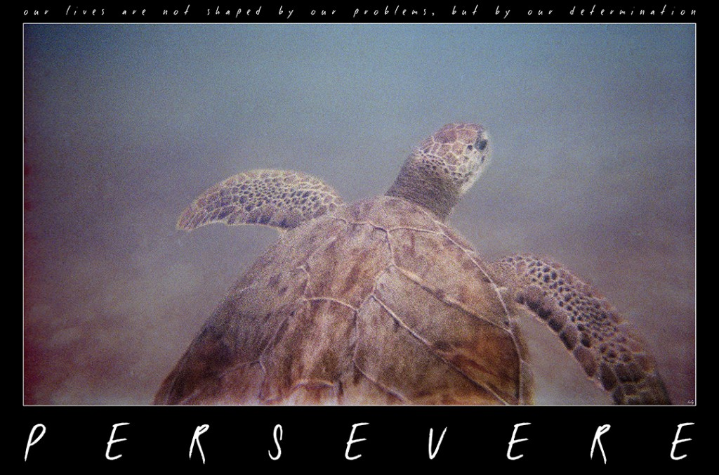 Persevere 2. The sea turtle, relentless seeker.