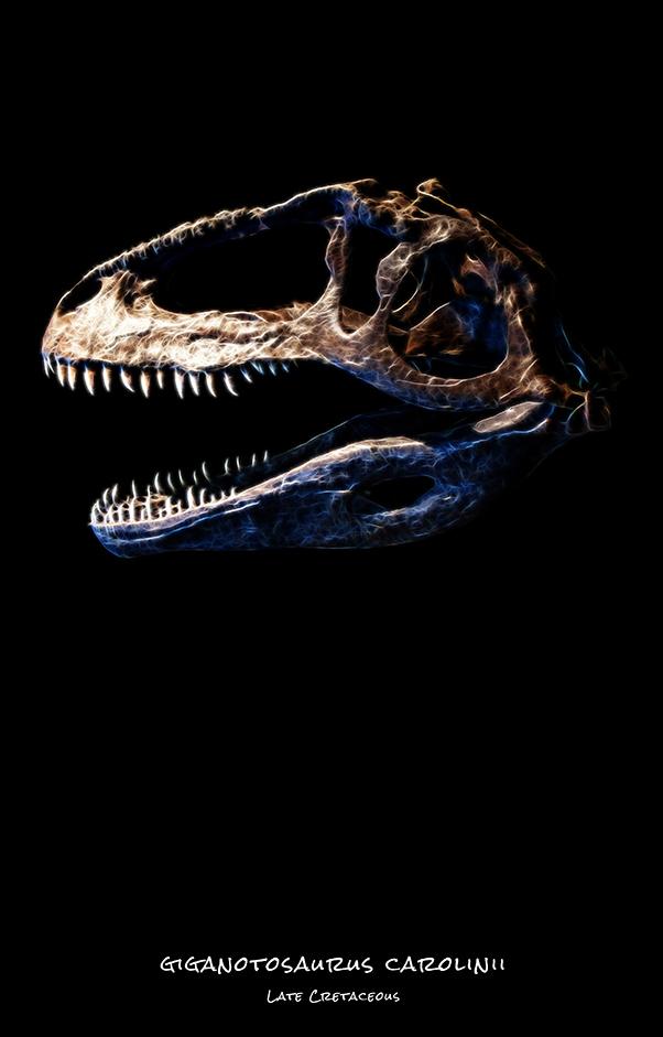 Giganotosaurus carolinii skull dinosaurs