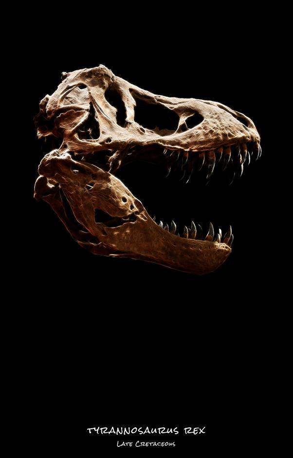 tyrannosaurus rex skull dinosaurs