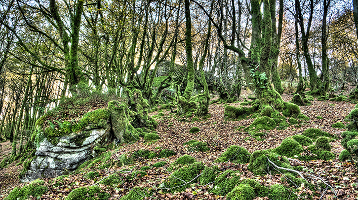 mossy beech forest