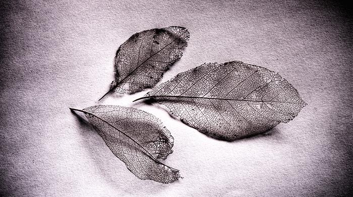 What Living Leaves Hide - Weston Westmoreland